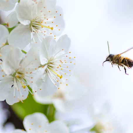 Feeling the Buzz...the importance of bees