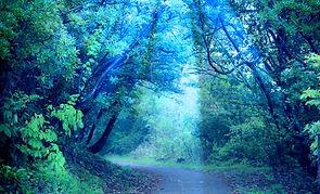 森に射す神秘的な光.jpg