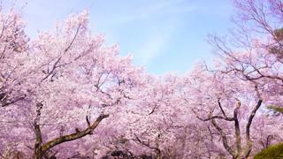 春分【二十四節気】
