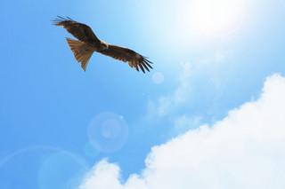 鷹乃学習 【七十二候】