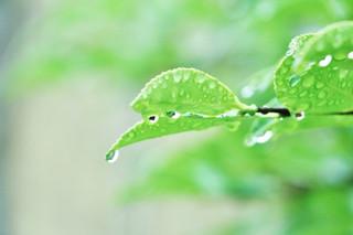 大雨時行【七十二候】