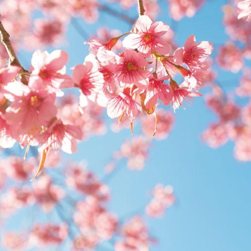 parfait_flower1.jpg