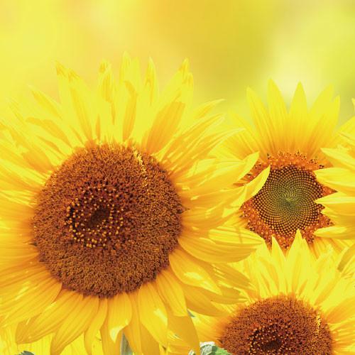 parfait_flower5.jpg