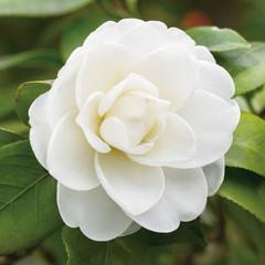 parfait_flower8.jpg