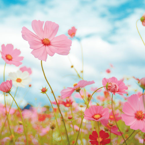 parfait_flower6.jpg