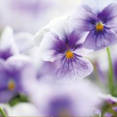 parfait_flower3.jpg