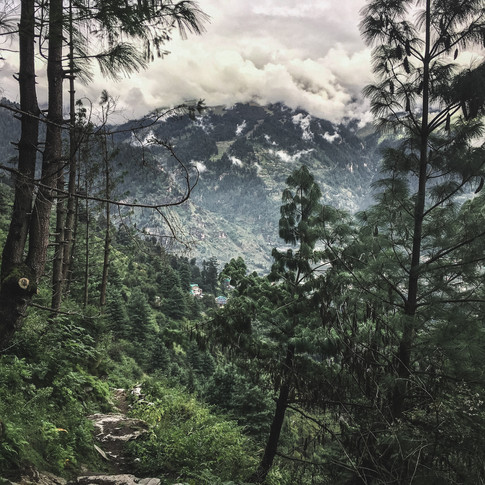 Misty mountains and thick forests in Himachal Pradesh, India