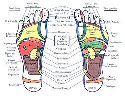 cartographie des pieds Reflexologie Aurélie Manceau