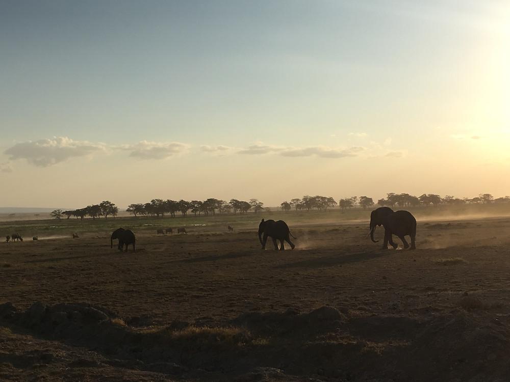 Image of family of elephants walking across the plains of Ambosielle national safari park