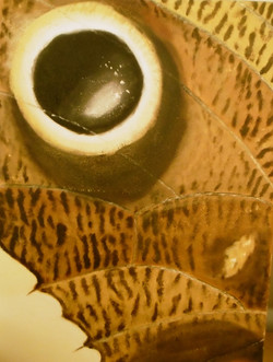 Eye on a wing
