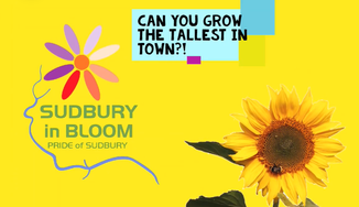 Sudbury in Bloom - pot up your own sunflower!