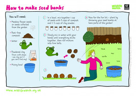 Make your own seed bombs!