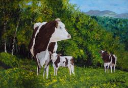 Vache Normande et son veau