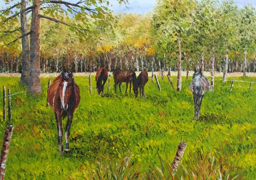 Le pré aux chevaux
