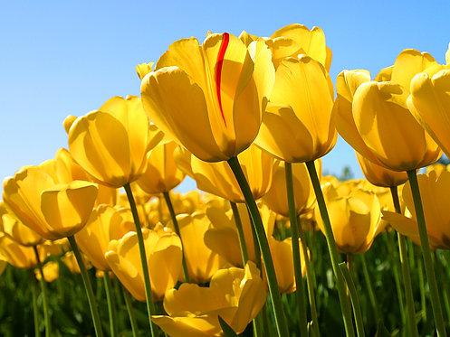 Atendimento Online incluso 1 Floral