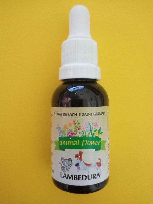 Lambedura - hábito de lamber parte do corpo