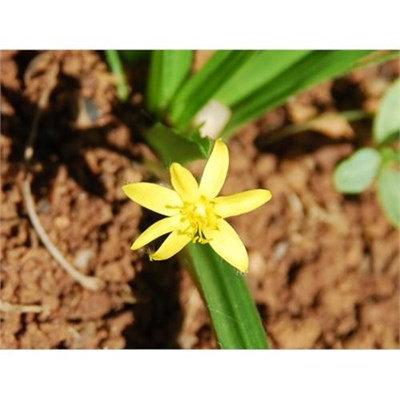 Floral Gracillis - reintegração de energias