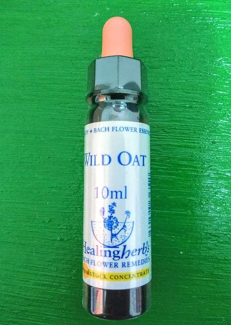 Wild Oat - Para encontrar e desenvolver o verdadeiro potencial