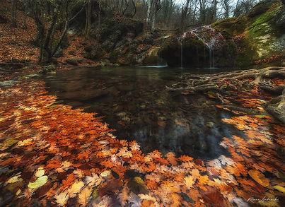 Водопад и арка из листьев ВК.jpg
