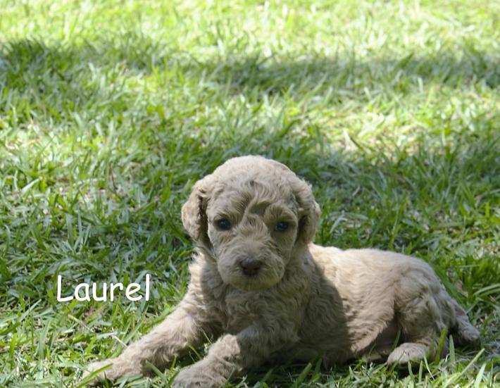 Laurel Lightfoot