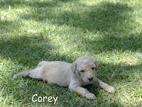 Corey Dunning Can't wait to meet her new Family!