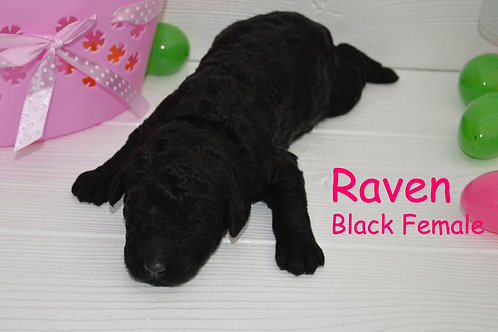 Raven Chambers