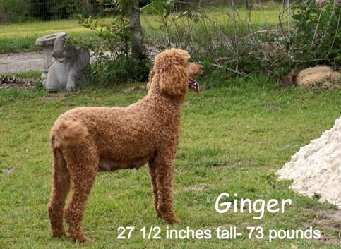 Ginger%20with%20kids2_edited_edited.jpg