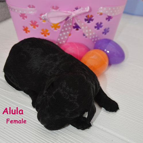 #1 Black Female- Alula