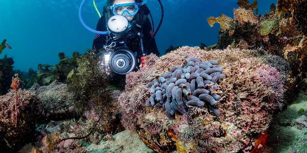 Discover local diving - guided shore dive (1)