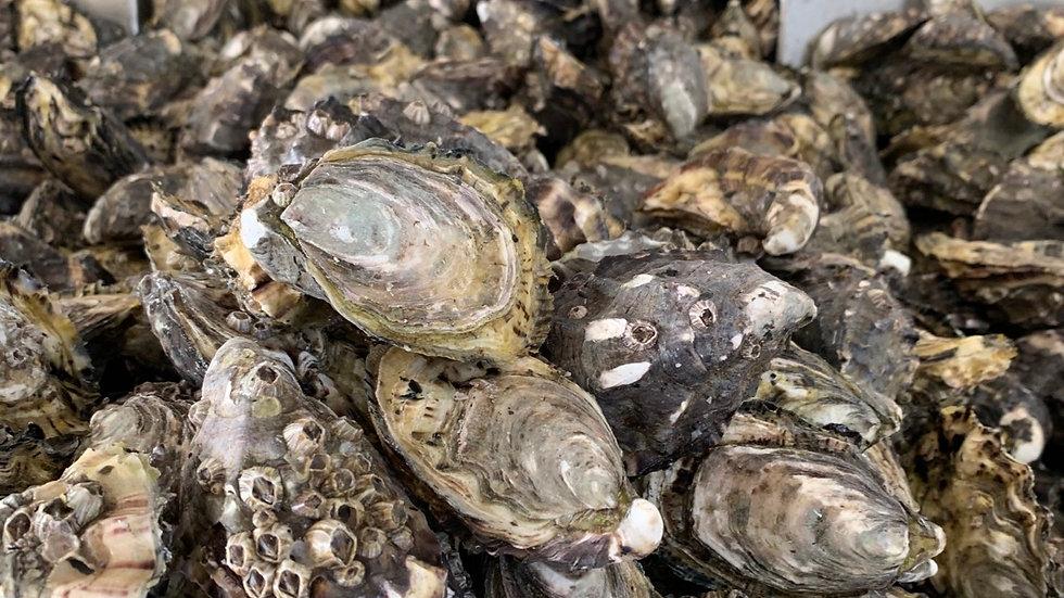 Rockhampton & Yeppoon Oysters 5 Dozen Bag - $75