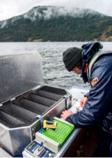 Remote fish counting station