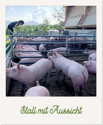 schweinestall_polaroid.jpg