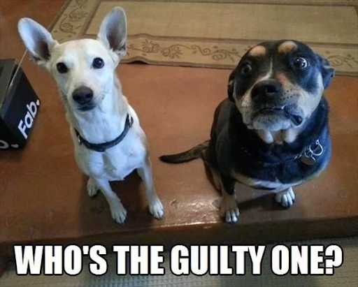 Meme: two dogs. Who's the guilty one?