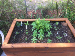 Herbs in Planter Box