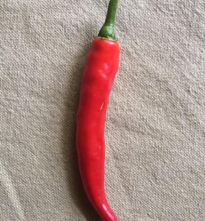 Todays' Harvest:  CAYENNE PEPPER