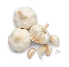 ybf garlic.jpg