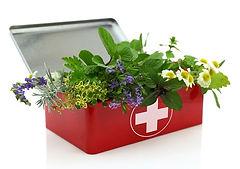 sp plantmedicine-1.jpeg