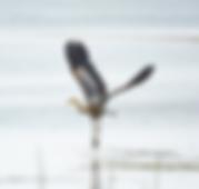 leadbetter_point_state_park_wildlife_ref