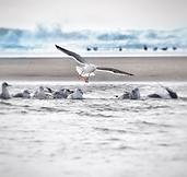 seagull%20landing