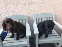 Dog Friendly accommodation Anglesey