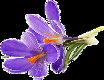 violet_edited.png