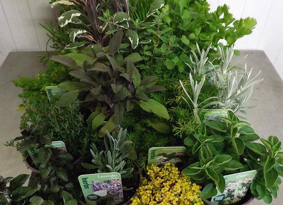 Herb Culinary P9
