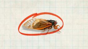 Hello Again, Cicadas. A Lot Has Happened Since 2003.