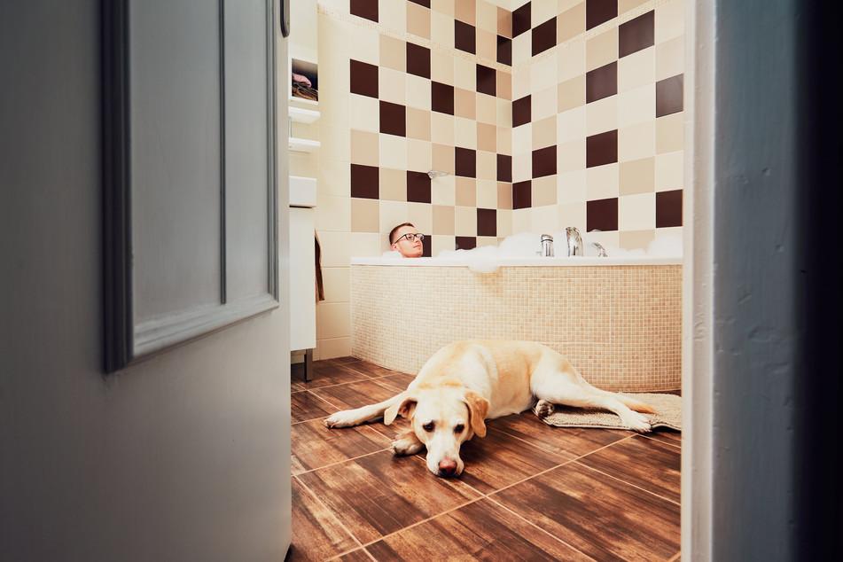 living-with-dog-min.jpg