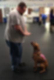 Veteran with PTSD training service do