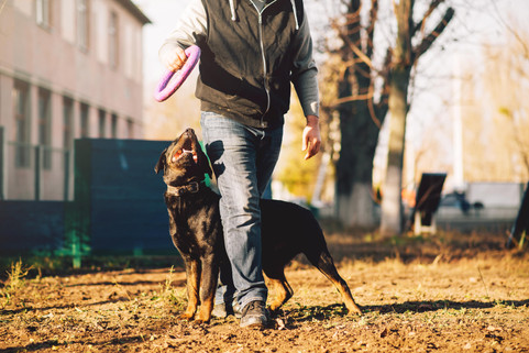 male-cynologist-police-dog-training-outd