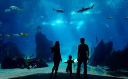 VB Aquarium