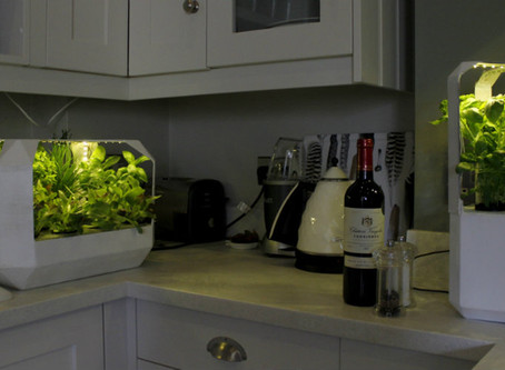 LettUs Grow –  University of Bristol students fight food waste with ingenious household salad garden