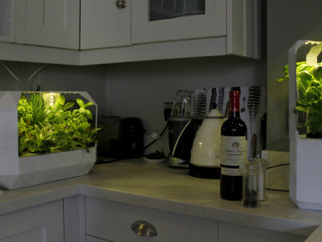 LettUs Grow –  University of Bristol students fight food waste with ingenious household salad garden