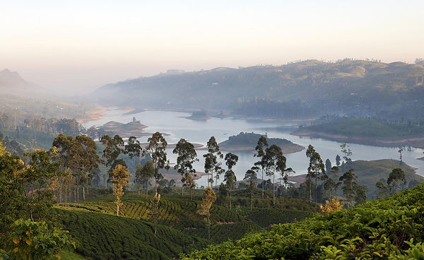 ceylon-tea-trails-6.jpg
